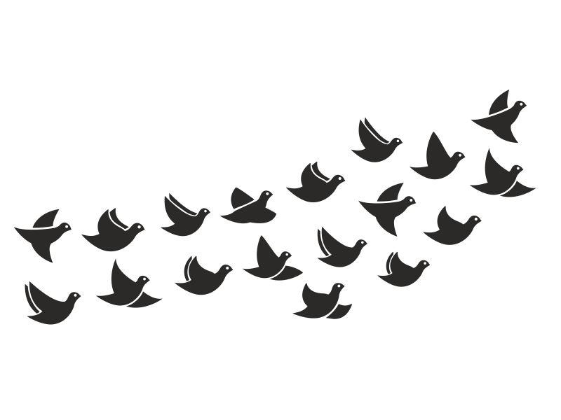 Ptaki W Locie Zwierzęta